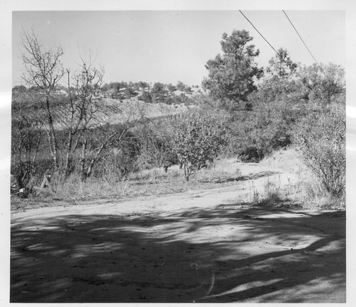 A 70 acre fruit ranch formerly operated by M. Miyamoto. This ranch, not being worked, raised principally plums, peaches and pears. Photographer: Stewart, Francis Penryn, California