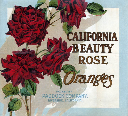 "Crate label, ""California Beauty Rose."" Oranges. Packed by Paddock Company, Riverside, California"