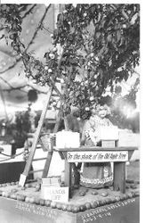 "1914 Gravenstein Apple Show exhibit of ""In the shade of the Old Apple Tree"" has a female manikin packing a box of apples, under an apples tree with a ladder against the tree"