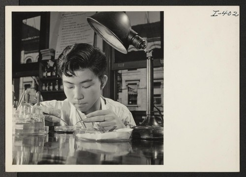 Shin Tanaka, 16-year-old Issei from the Central Utah Relocation Center, who plans to be a doctor, is receiving training at