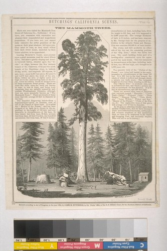 Hutchings' California Scenes. The Mammoth Trees