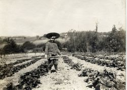 Young Roland Henry DaVall, son of Melvin and Nellie DaVall stands with a hoe in the DaVall berry fields in Sebastopol, about 1914