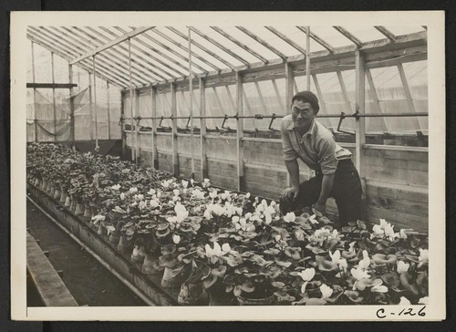 San Leandro, Calif.--Greenhouse on nursery operated, before evacuation, by horticultural experts of Japanese ancestry. Many of the Nisei (born in