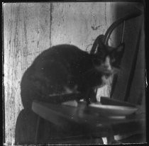 Cat sitting on a chair with saucer