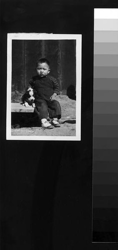 Japanese American boy sitting with puppy
