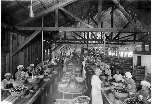 Women workers at Hinkley Beach Canning Company