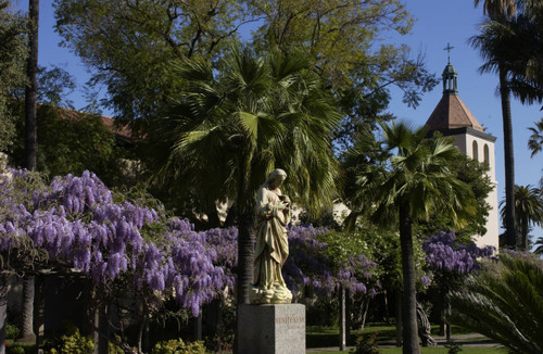 Wisteria, Mission Gardens