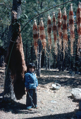 Unidentified Indian child next to bear skin and maple bark flag at the Greenville Bear Dance--1971