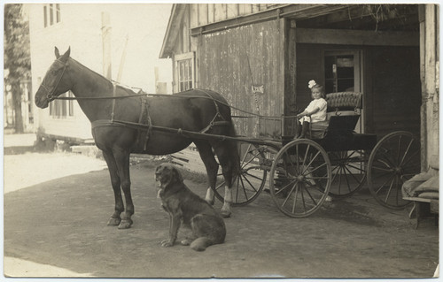 [Carriage in Greenville, Plumas Co.]