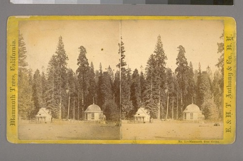 Mammoth Tree Grove.--Photographer: E. & H. T. Anthony & Co.--Photographer's Number: 1--Place of Publication: New York.--Photographer's Series: Mammoth Trees, California