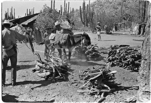 Wood collectors at Rancho Carrizito