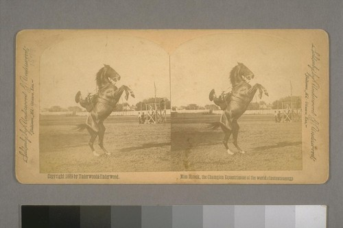 Miss Hicock [Emma Lake], the Champion Equestrienne of the World. (Instantaneous) 1889