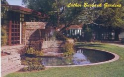 Luther Burbank Gardens showing a rock pool that was created in memory of Luther Burbank, ingenious plant wizard