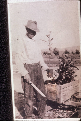 George Beck planting seedling avocados