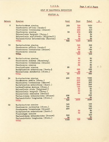 1940 Gulf of California Expedition Station 9 List of Species