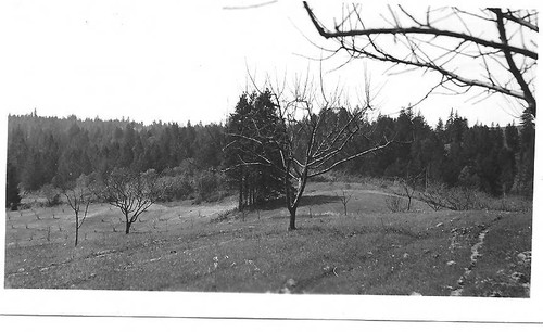 Top of apple and pear orchards on the Taylor property on Taylor Lane west of Sebastopol on March 22, 1942