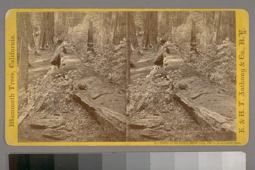 Father of the Forest, 450 ft. long, 112 ft. in circumference.--Photographer: E. & H. T. Anthony & Co.--Photographer's Number: 4--Place of Publication: New York.--Photographer's Series: Mammoth Trees, California