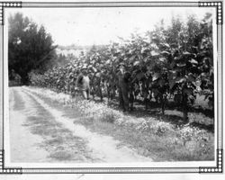 F. J. Riddell and a worker named Blackie stand beside a planted field or orchard
