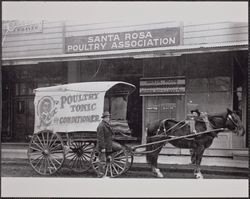 Horse and covered wagon in front of the Santa Rosa Poultry Association building, 313-315 A Street, Santa Rosa, California, about 1910