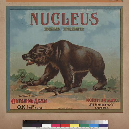 Nucleus Bear Brand, Grown and Packed by Ontario Association