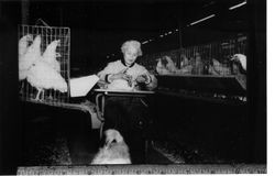 Anne Cherney seated in at a desk with a chicken in the poultry barn at her chicken ranch on Burnside Road