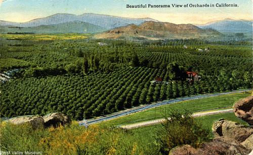 Orchards in Chatsworth, circa 1920