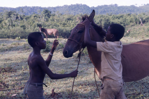 Two boys pulling on the reins on a mule, San Basilio de Palenque, 1976