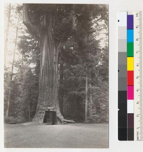 Calisphere: Redwood. \