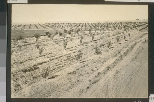 No. 148. General view, University experimental farm orchard, July 1922