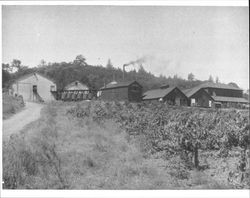 Exterior View of the Sunsweet Prune Packing Plant, Geyserville, California, about 1910