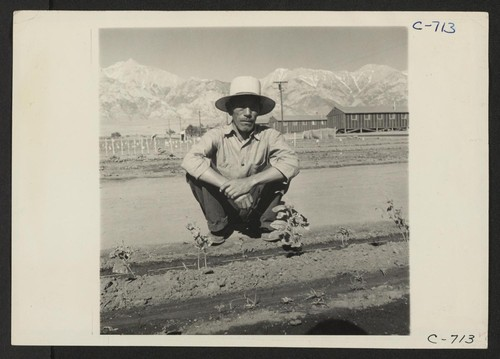 Manzanar, Calif.--This evacuee spends most of his time at the Hobby Gardens project at this War Relocation Authority center. Former occupation: nurseryman. Photographer: Lange, Dorothea Manzanar, California