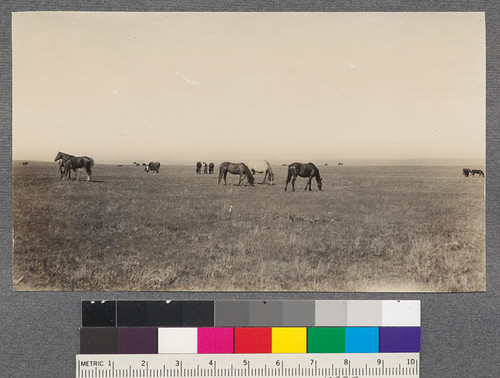 Horse range, near Homestead, Montana. Beyond the northern limit of sagebrush the Poa-Wheat grass type furnishes forage of high quality. Density 0.6. T.31 N. R.55, E.P.M., Sec. 4