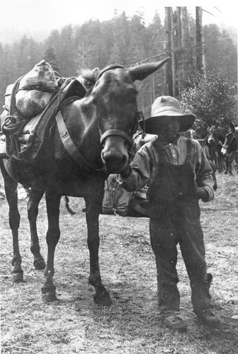 Klamath Glen (Terwer Flat): A mule load of chrome ore from Red Mountain, ca. 1917