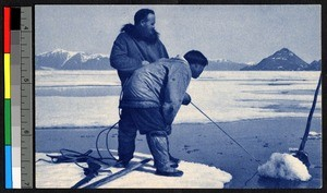 Two men pulling in a narwhal toward the edge of an ice floe, Canada, ca.1920-1940
