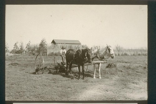 No. 248. Baling hay on Mr. Sawyer's allotment 239, August 14, 1923