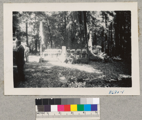 Setting for the dedication of Joy Woods as a tree farm, Sonoma County. Sept. 1951