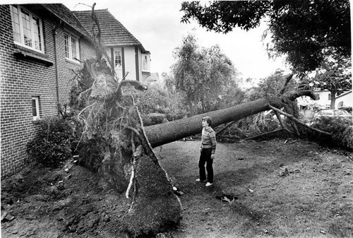 Wind damage, Glendale, 1982