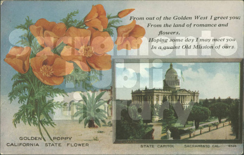Calisphere golden poppy california state flower golden poppy california state flower mightylinksfo