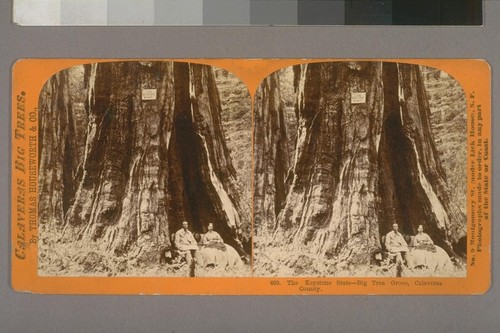 The Keystone State--Big Tree Grove, Calaveras County.--Photographer: Thomas Houseworth--Photographer's number: 899--Place of Publication: San Francisco.--Photographer's series: Calaveras Big Trees