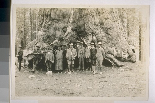 Roosevelt Party at Mariposa Grove. Left to right: 2 secret service men, Secretary of the Navy Moody, Governor Pardee, President Roosevelt, Dr. Rixey, John Muir, Nicholas Murray Butler, Secretary Loeb, Benjamin Ide Wheeler. Photograph by J. N. LeConte