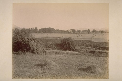 View on Farm of Chas. T. Wilkinson, Showing Young Cherry Orchard, and Residence of A. Brown beyond