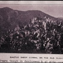 Cactus Sheep Corral