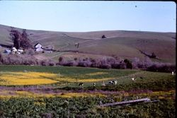 Bodega area farm/orchard off Highway 12, one mile east of Bodega, California, May 1991