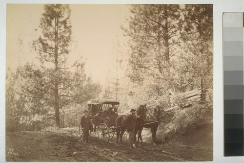165. [Unidentified men with horse buggy.]