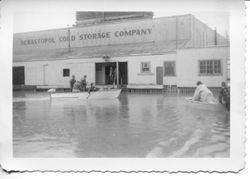 1951 floodwaters surround the Sebastopol Cold Storage Company and two boats with people ply the water