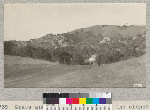 Grass and woodland country on the slopes of Mt. Diablo, Contra Costa County, burned over by fire of October, 1925. Fire was stopped at trail in foreground
