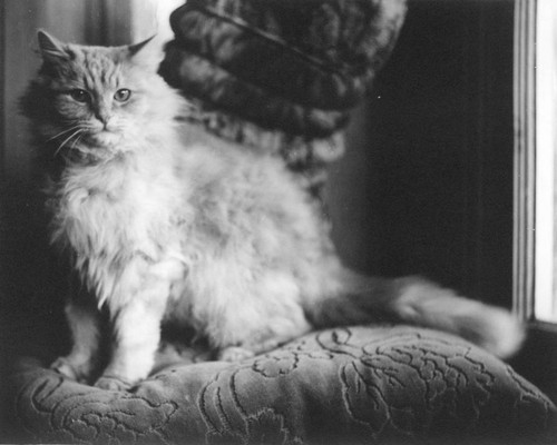 Long haired cat standing on a cushion