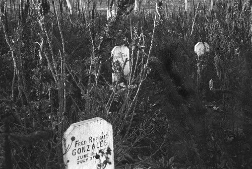 View of Colusa Rancheria Cemetery--Gravestones of Fred Raphael Gonzalez and Henry Pulsifer