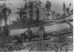 Sugar Loaf Logging Show, July 27, 1914, at Sturgeon's Mill, Coleman Valley, Occidental