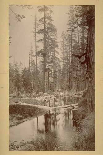 View from Camp in the North Fork. 1883